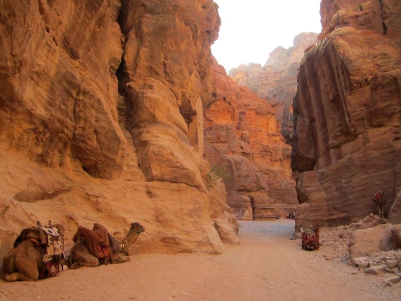 Trekking Wadi Musa w/ Camels!